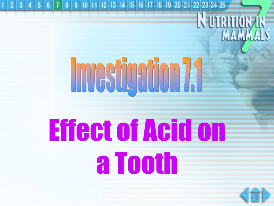 Effect of Acid on a Tooth