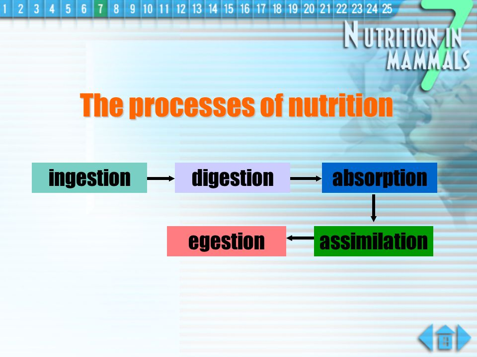 The processes of nutrition