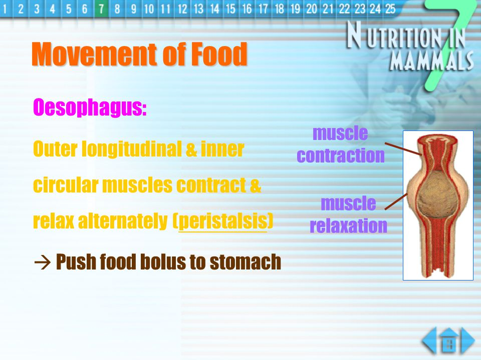 Movement of Food Oesophagus: