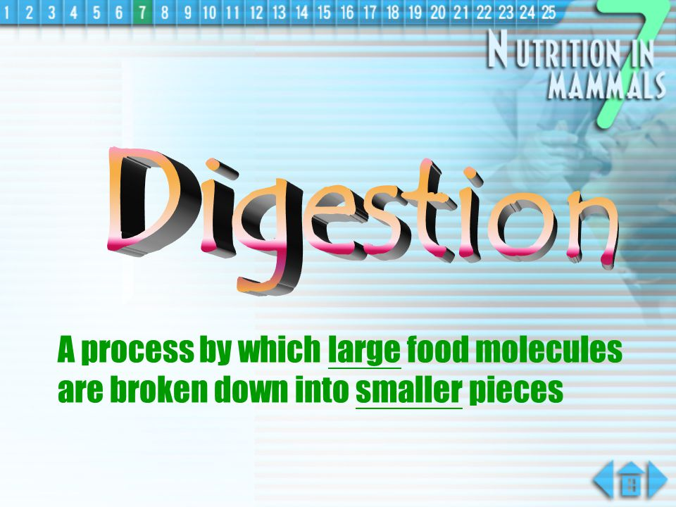 Digestion A process by which large food molecules are broken down into smaller pieces