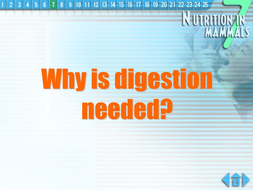Why is digestion needed