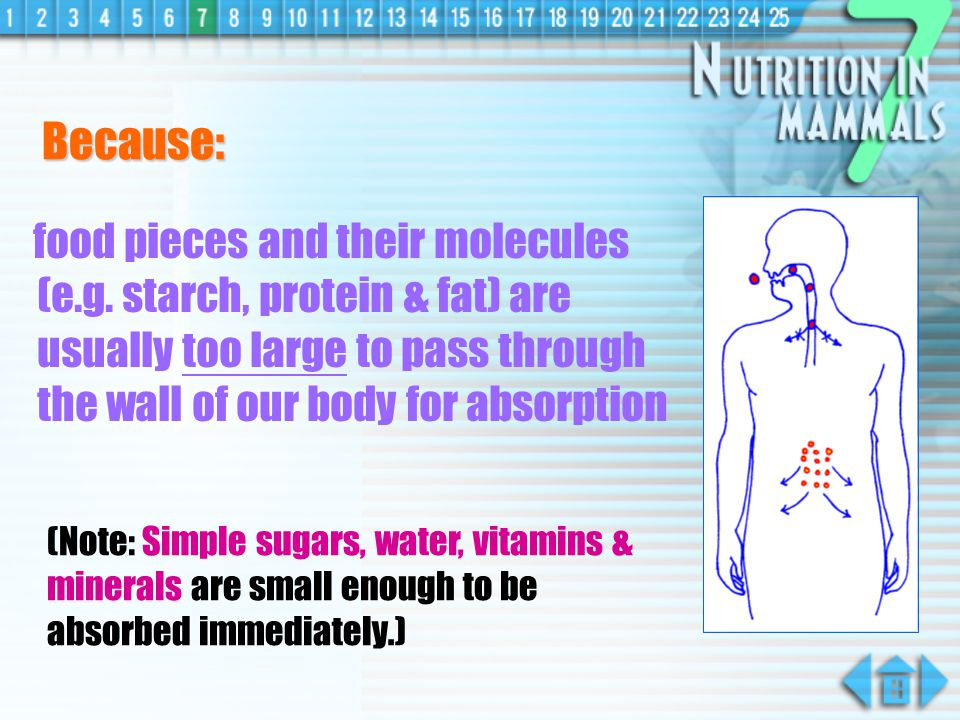 Because: food pieces and their molecules (e.g. starch, protein & fat) are usually too large to pass through the wall of our body for absorption.