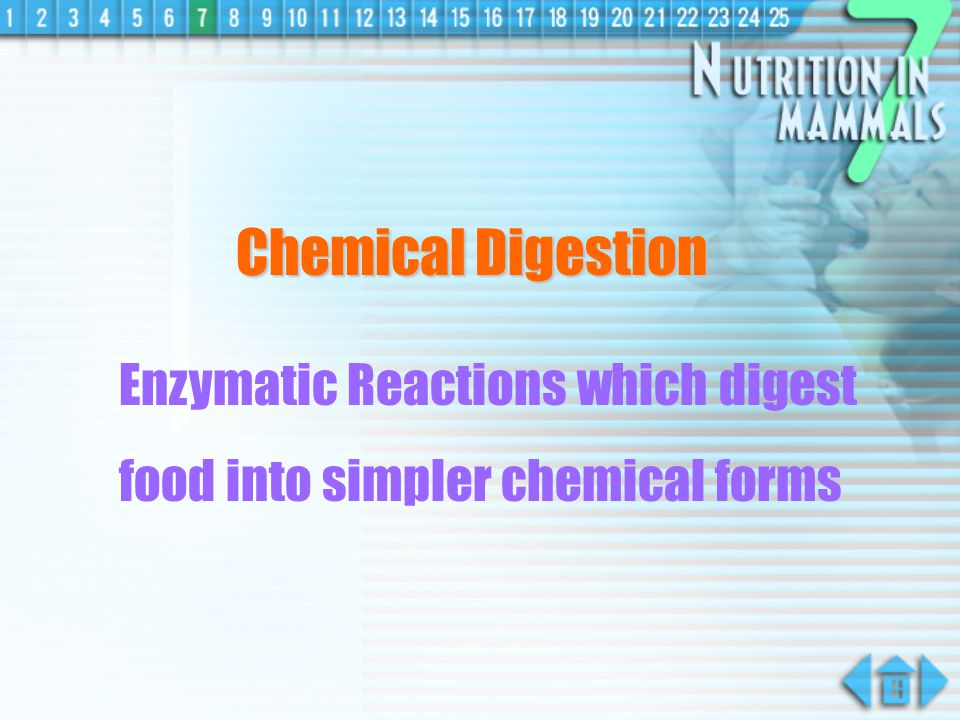 Chemical Digestion Enzymatic Reactions which digest food into simpler chemical forms