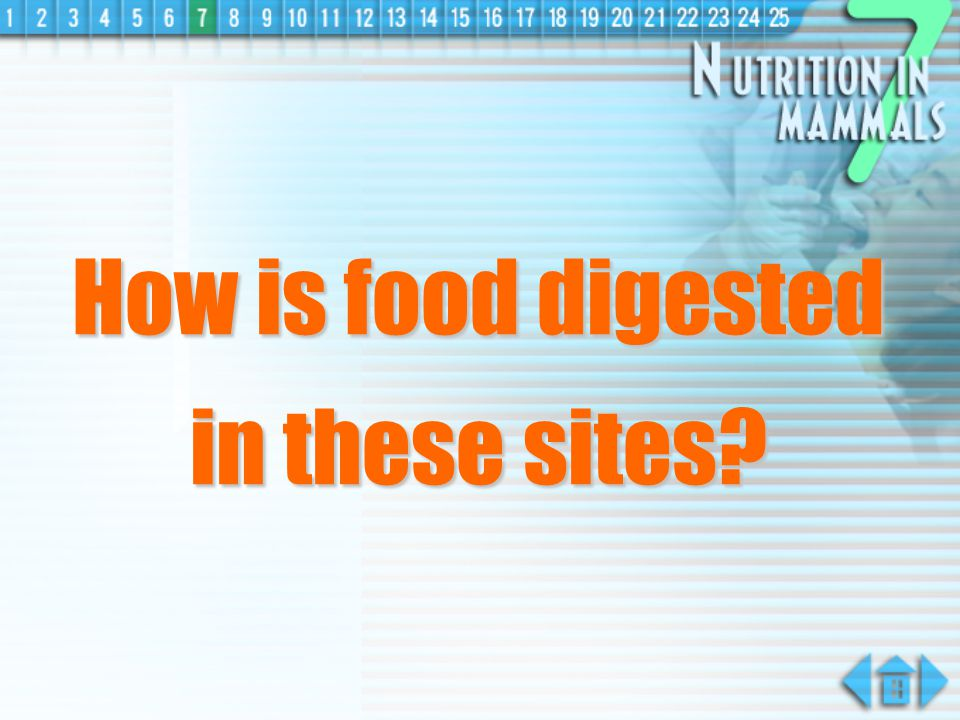How is food digested in these sites