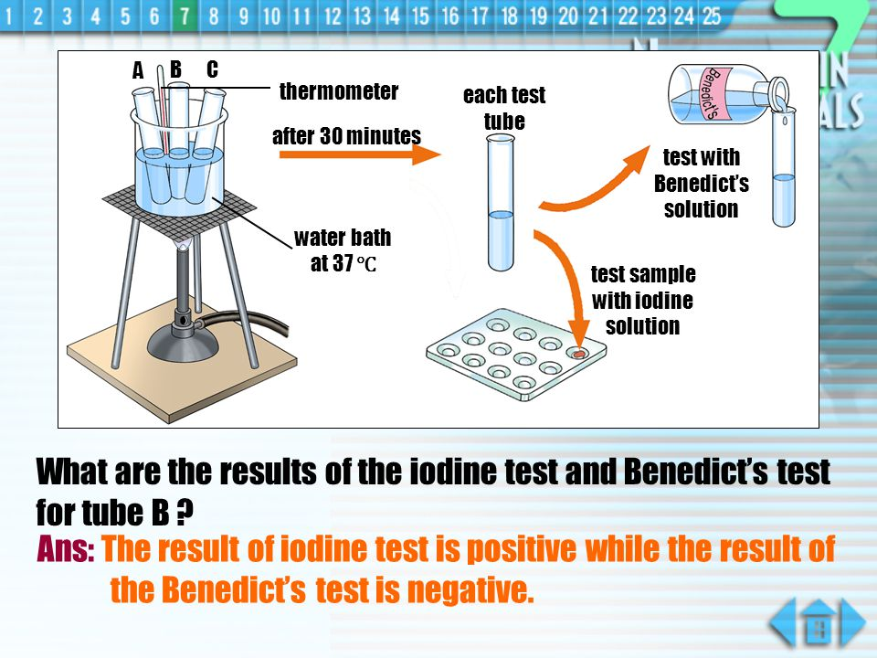 A B. C. thermometer. each test tube. after 30 minutes. test with Benedict's solution. water bath at 37 ℃
