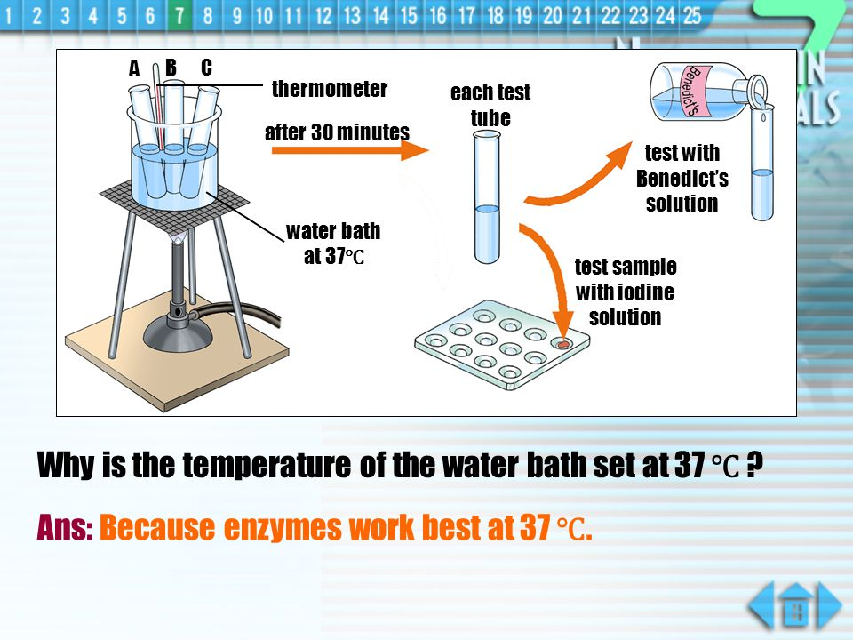 Why is the temperature of the water bath set at 37 ℃