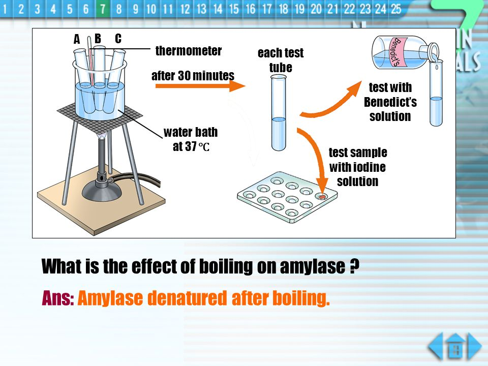 What is the effect of boiling on amylase