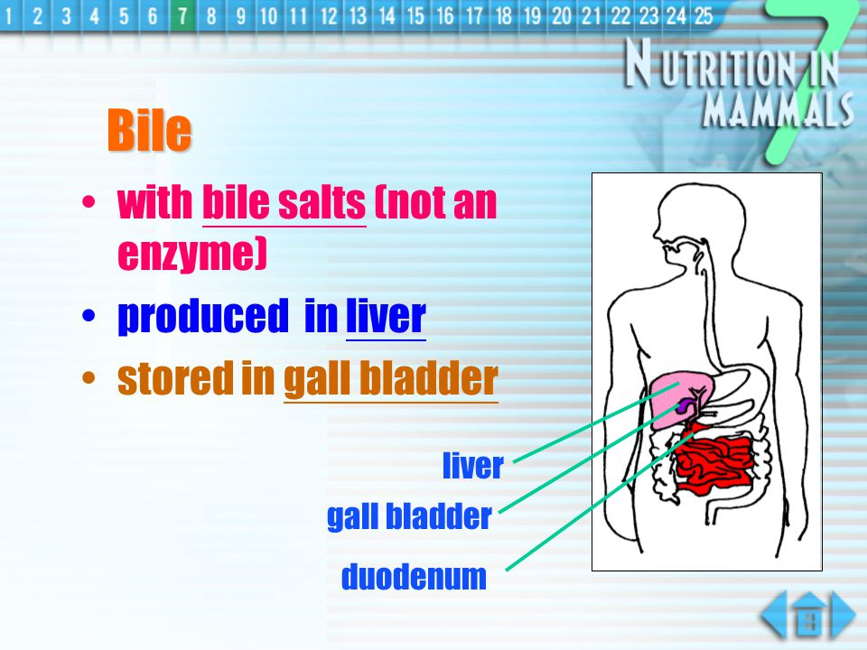 Bile with bile salts (not an enzyme) produced in liver