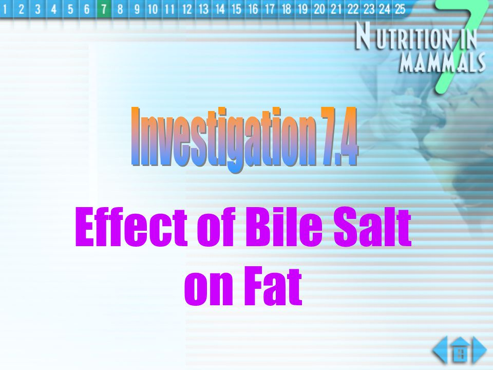 Effect of Bile Salt on Fat