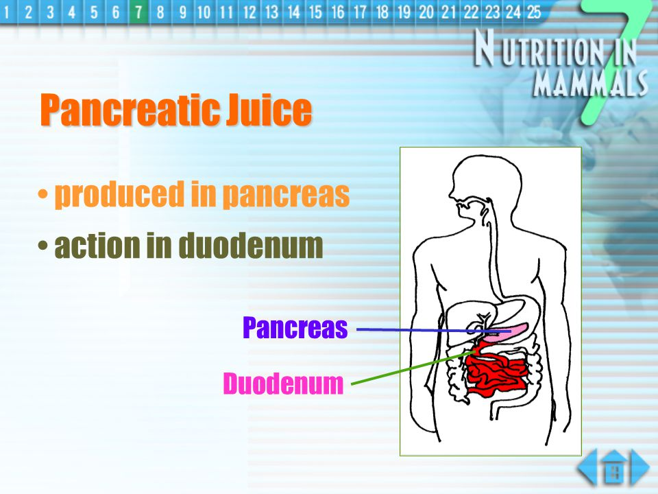 Pancreatic Juice produced in pancreas action in duodenum Pancreas