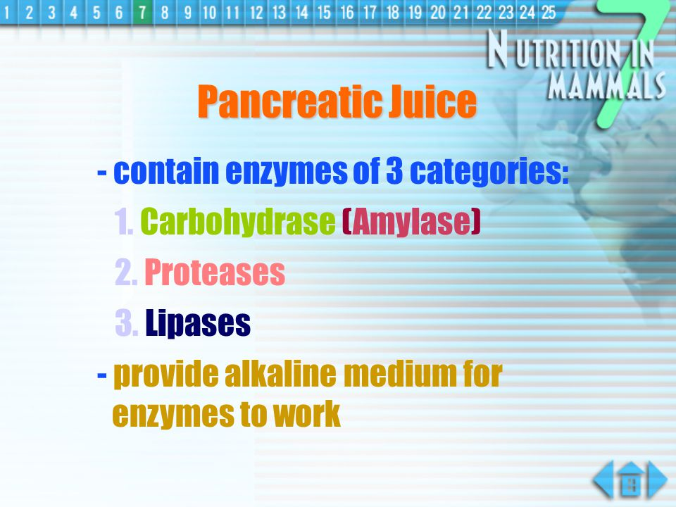 Pancreatic Juice - contain enzymes of 3 categories: