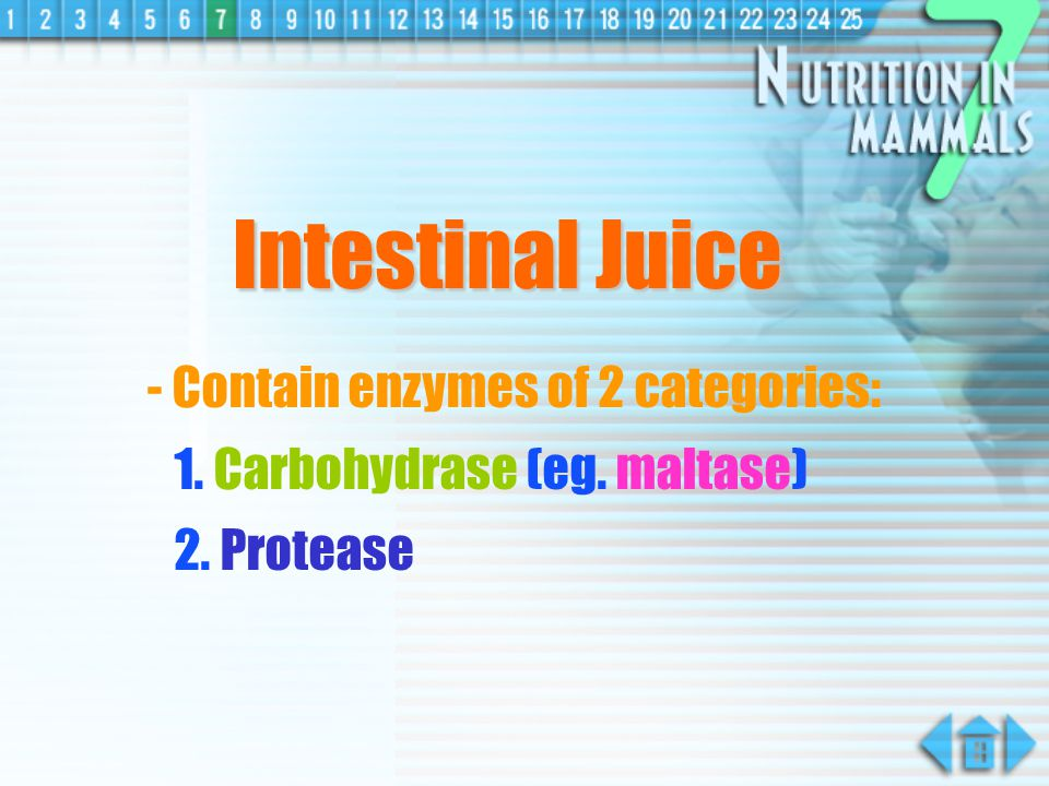 Intestinal Juice - Contain enzymes of 2 categories: