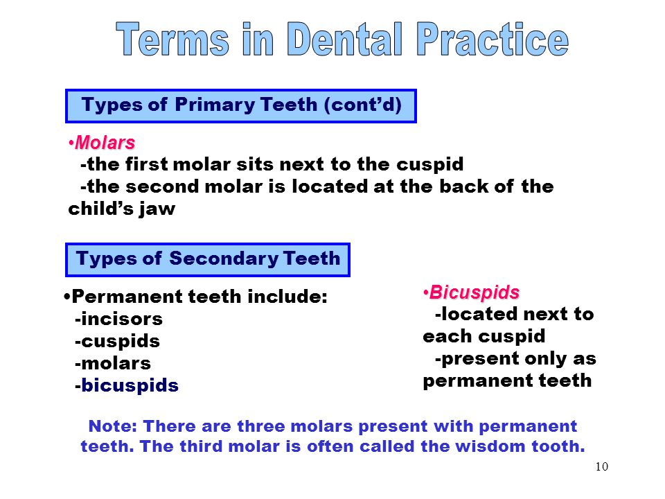 Types of Primary Teeth Part 2