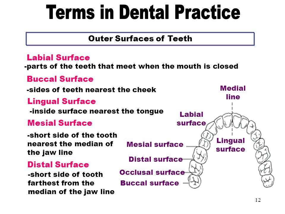 Outer Surfaces of Teeth