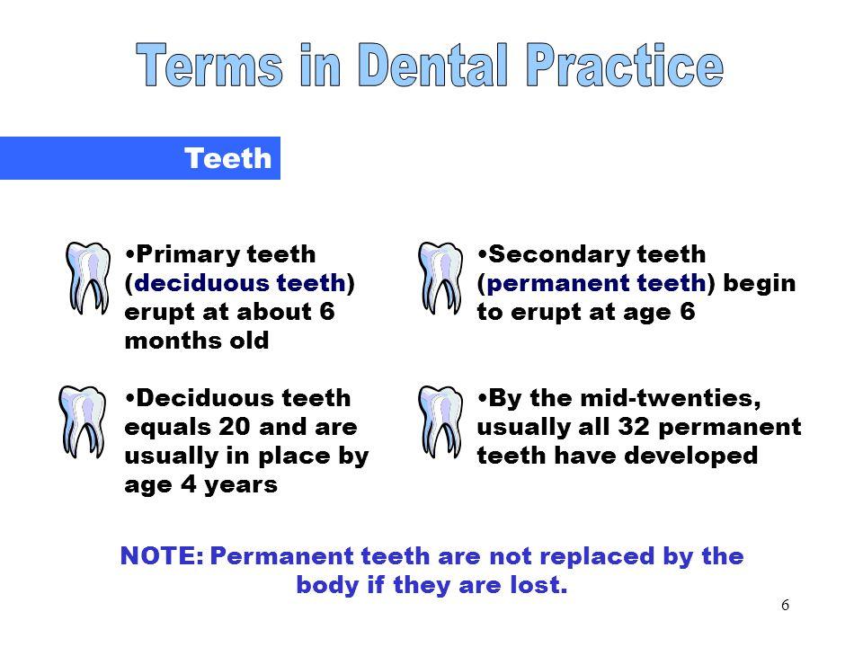 Teeth Terms in Dental Practice Teeth
