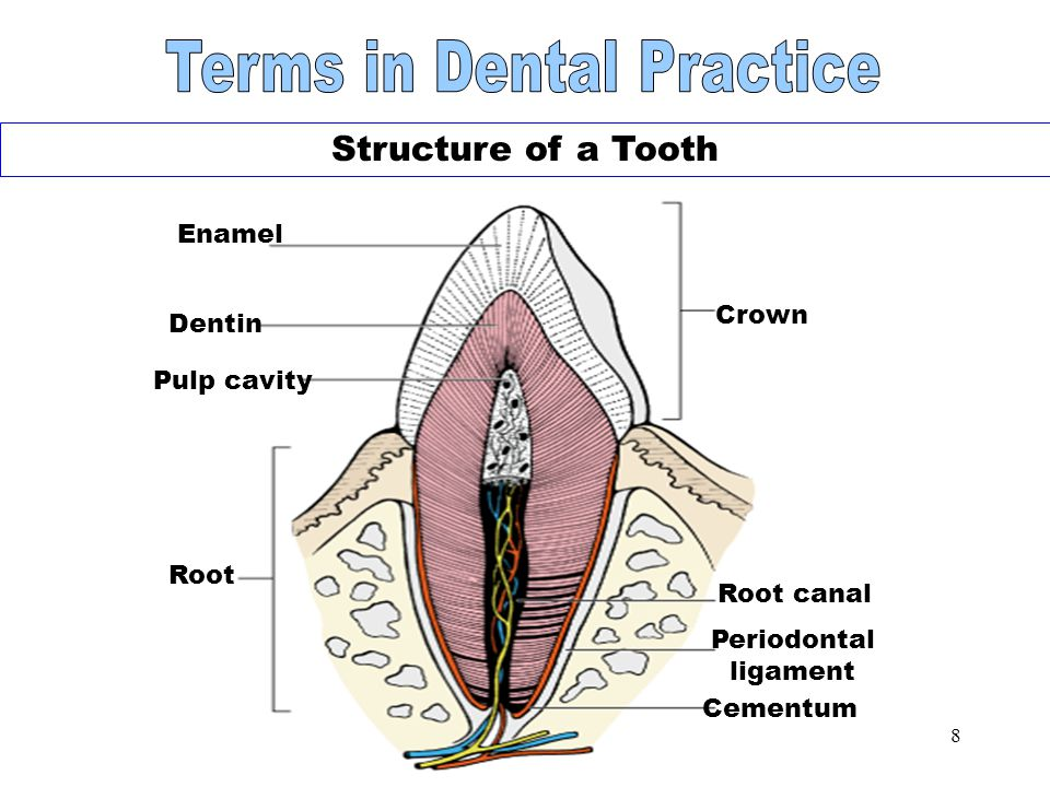 Terms in Dental Practice