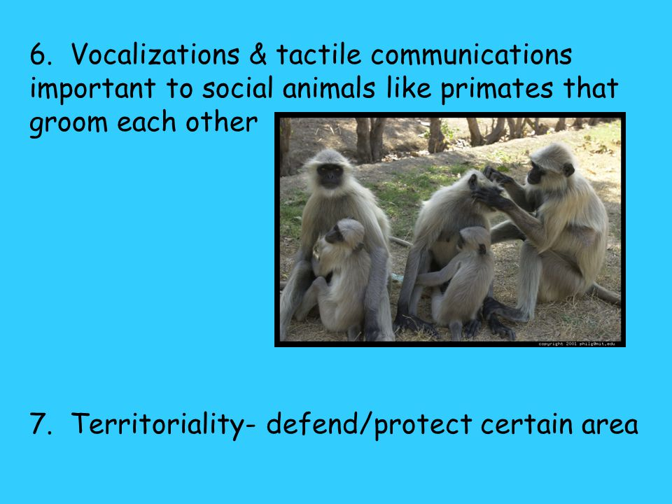 6. Vocalizations & tactile communications important to social animals like primates that groom each other