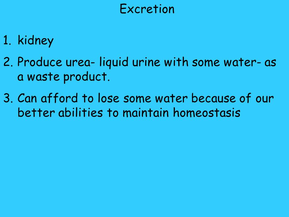 Excretion kidney. Produce urea- liquid urine with some water- as a waste product.
