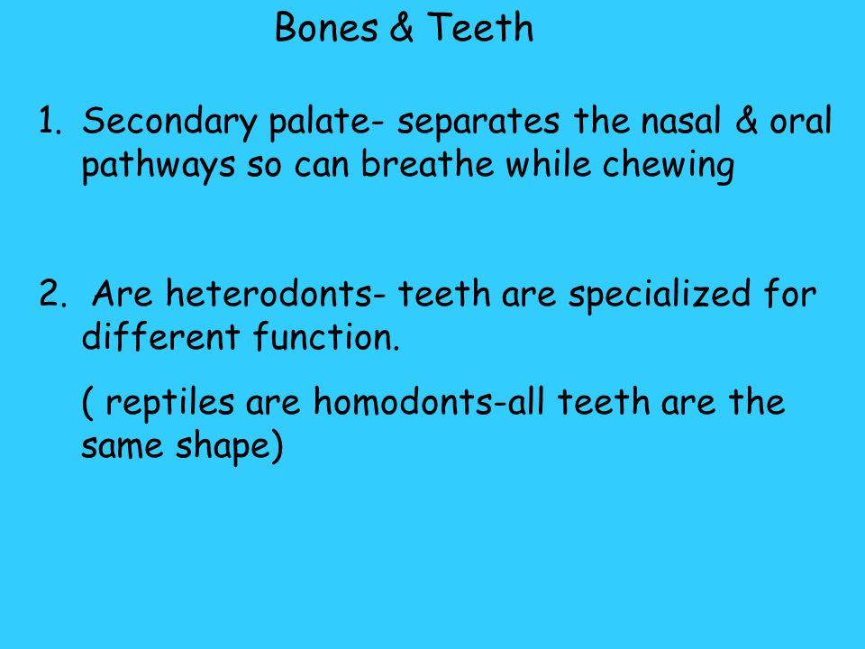 Bones & Teeth Secondary palate- separates the nasal & oral pathways so can breathe while chewing.