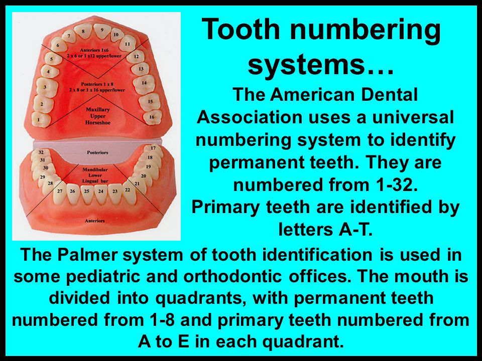 Tooth numbering systems…