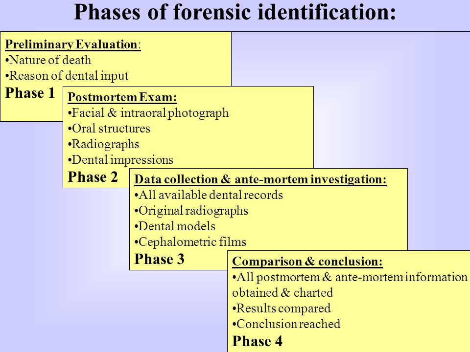 Phases of forensic identification: