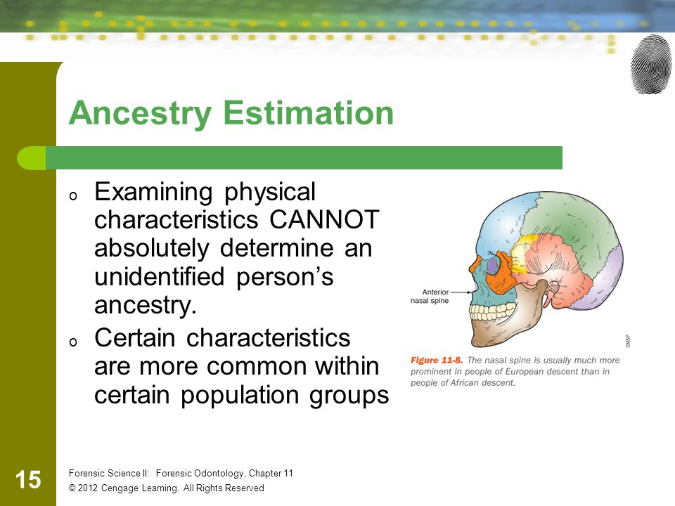 Ancestry Estimation Examining physical characteristics CANNOT absolutely determine an unidentified person's ancestry.
