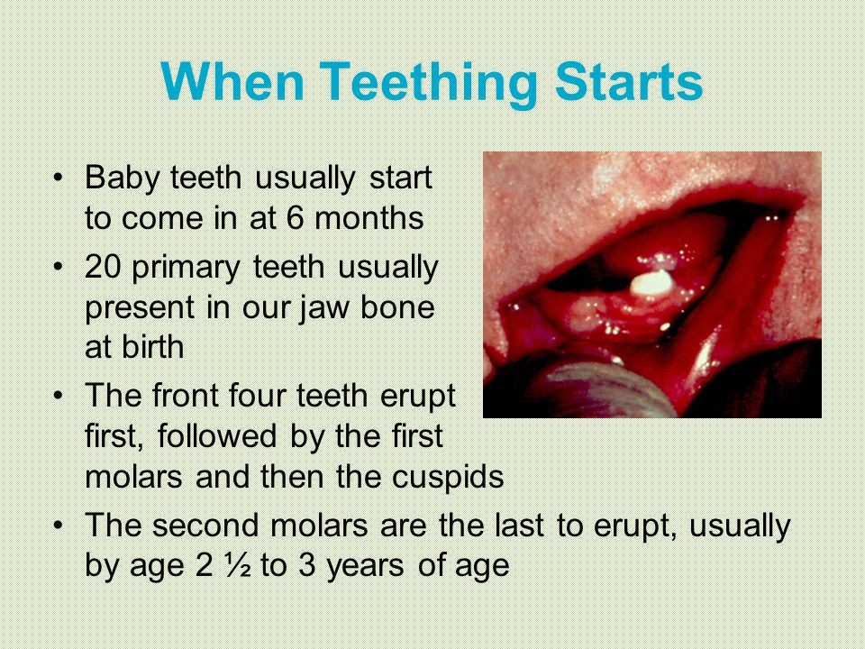 When Teething Starts Baby teeth usually start to come in at 6 months