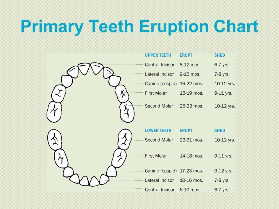 Primary Teeth Eruption Chart