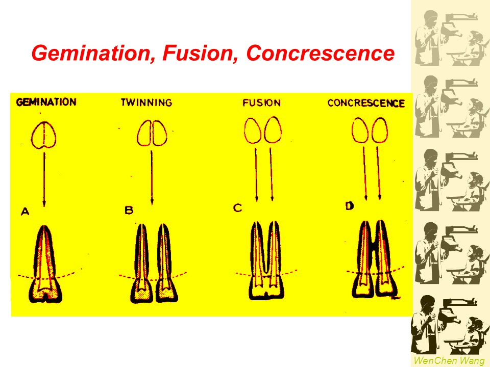 Gemination, Fusion, Concrescence