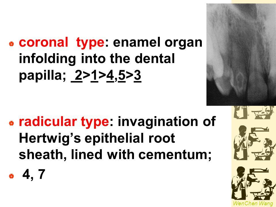 coronal type: enamel organ infolding into the dental papilla; 2>1>4,5>3