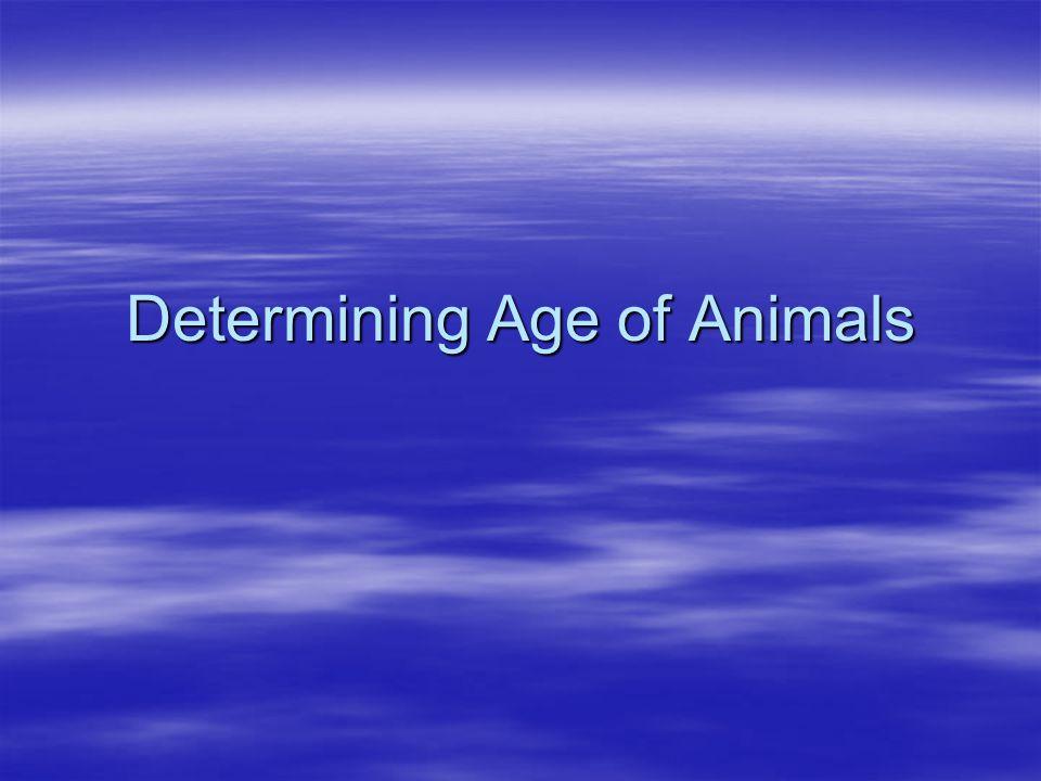 Determining Age of Animals