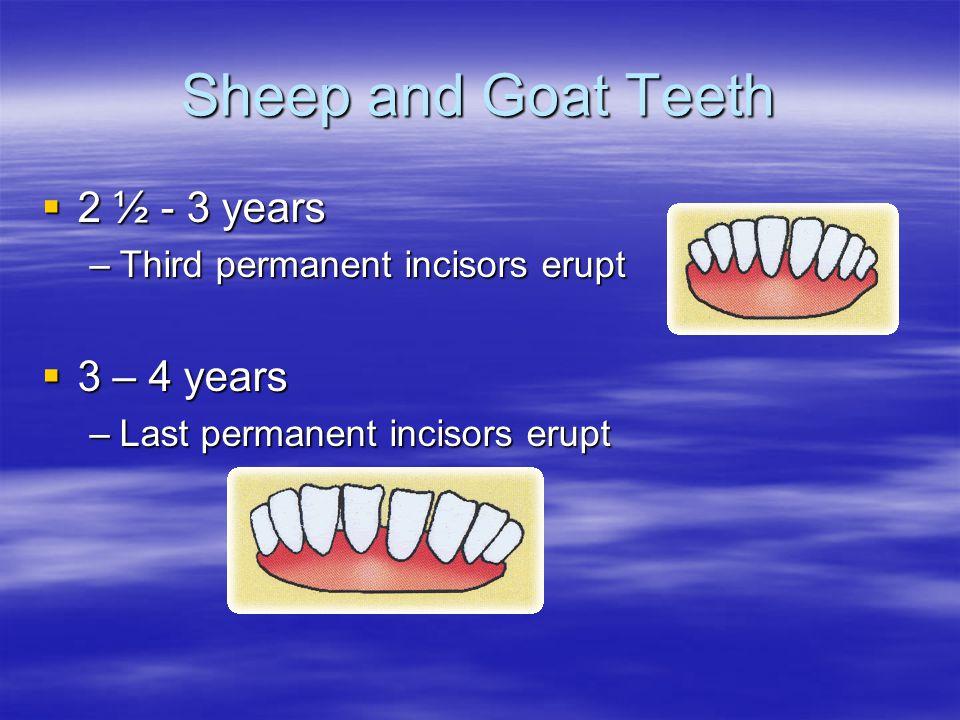Sheep and Goat Teeth 2 ½ - 3 years 3 – 4 years