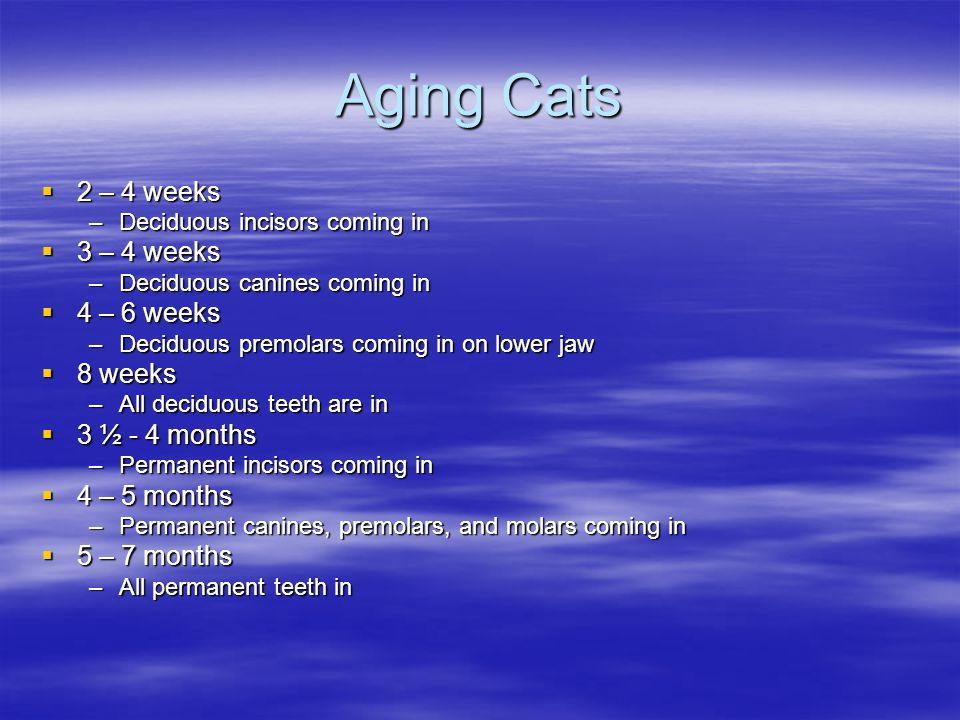 Aging Cats 2 – 4 weeks 3 – 4 weeks 4 – 6 weeks 8 weeks 3 ½ - 4 months