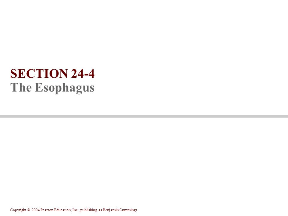 SECTION 24-4 The Esophagus