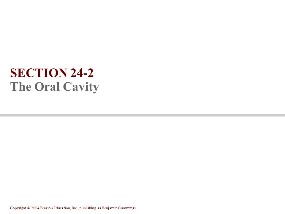 SECTION 24-2 The Oral Cavity