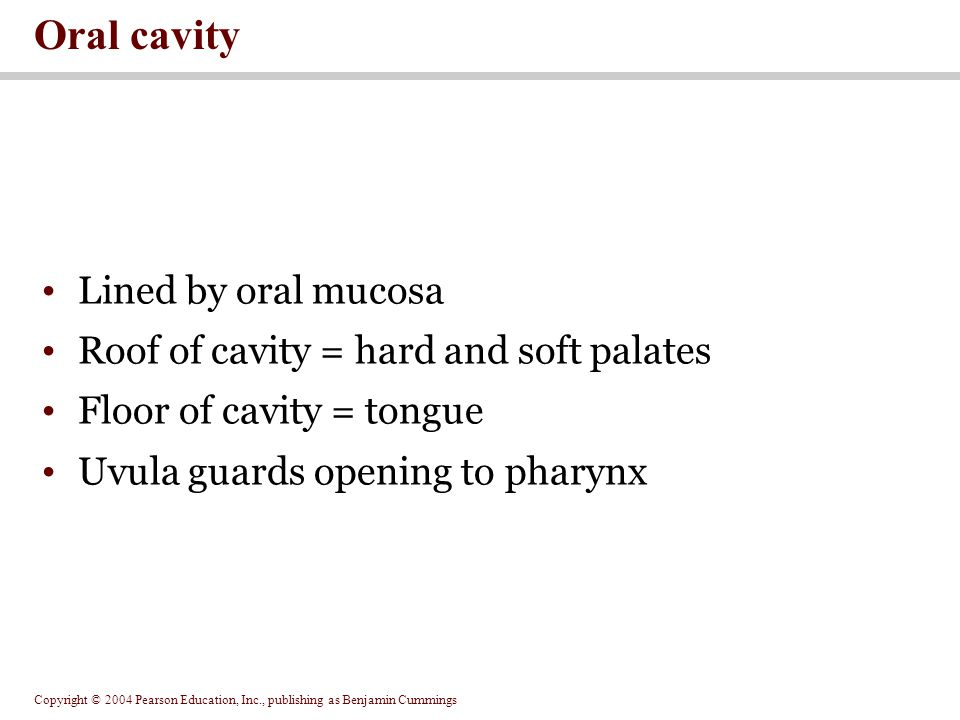 Oral cavity Lined by oral mucosa