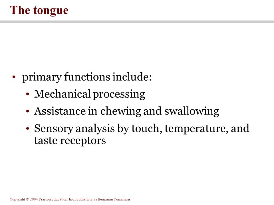 The tongue primary functions include: Mechanical processing