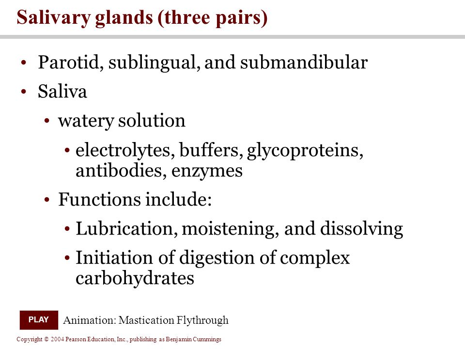 Salivary glands (three pairs)