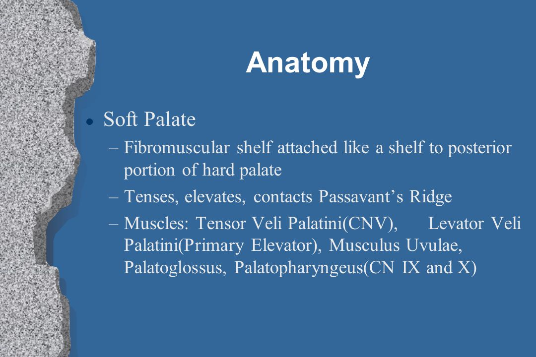 Anatomy Soft Palate. Fibromuscular shelf attached like a shelf to posterior portion of hard palate.