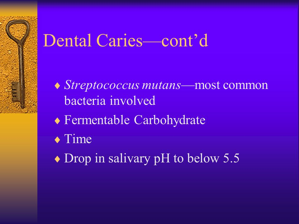 Dental Caries—cont'd Streptococcus mutans—most common bacteria involved. Fermentable Carbohydrate.