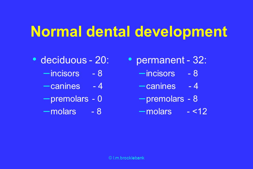 Normal dental development