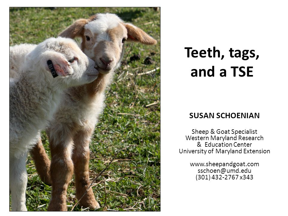 Teeth, tags, and a TSE