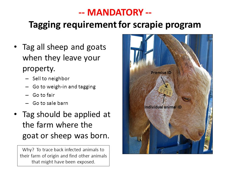 -- MANDATORY -- Tagging requirement for scrapie program