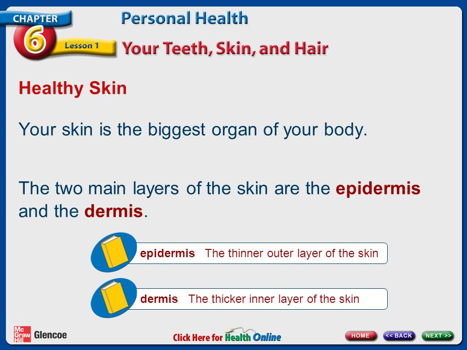 Your skin is the biggest organ of your body.