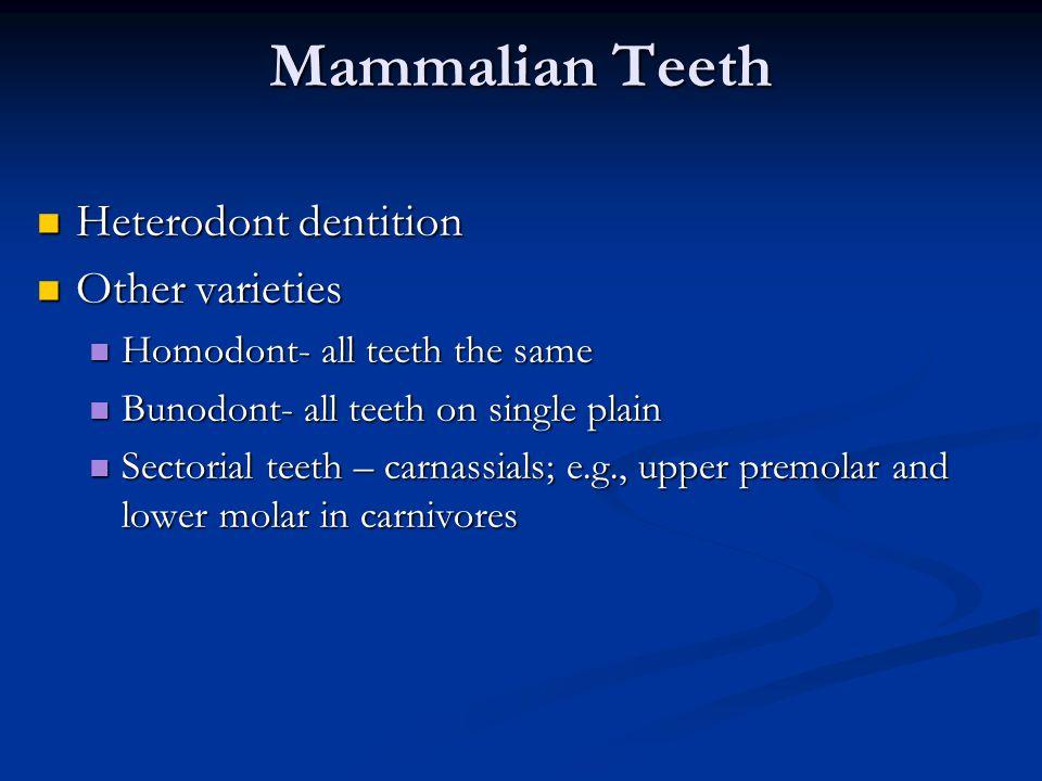 Mammalian Teeth Heterodont dentition Other varieties