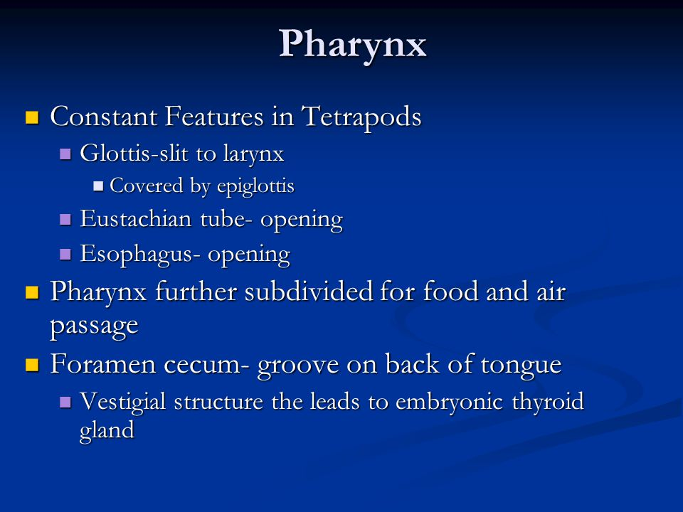 Pharynx Constant Features in Tetrapods