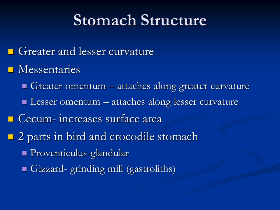Stomach Structure Greater and lesser curvature Messentaries