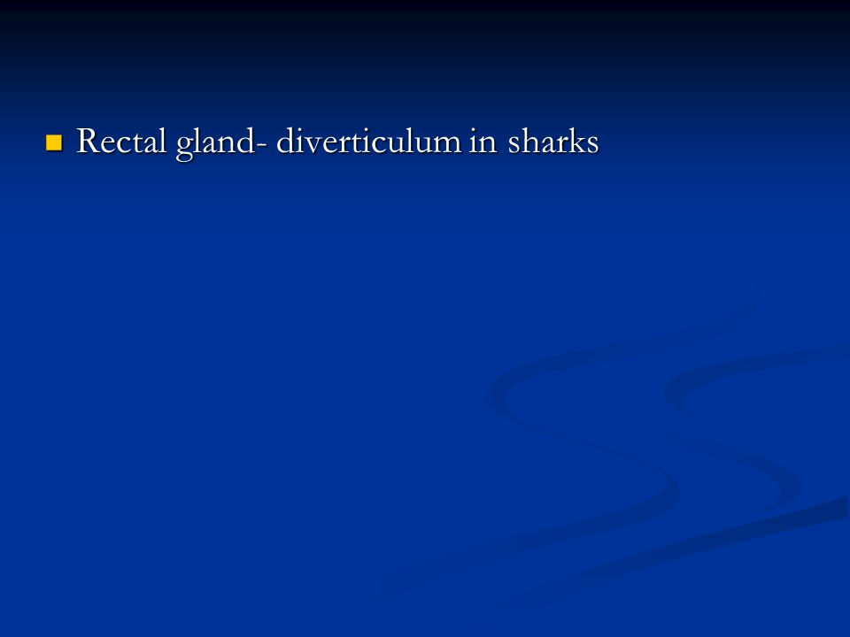 Rectal gland- diverticulum in sharks