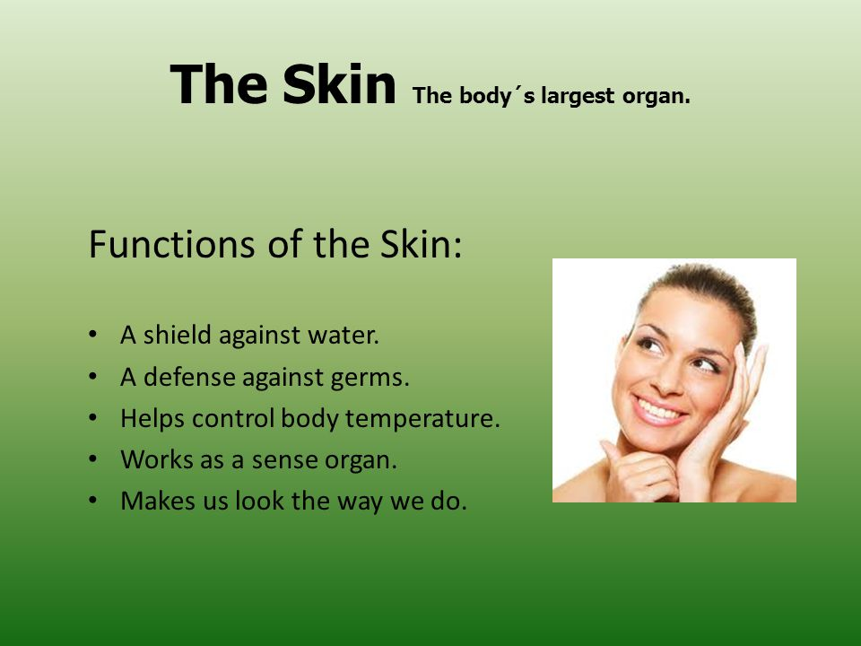 The Skin The body´s largest organ.