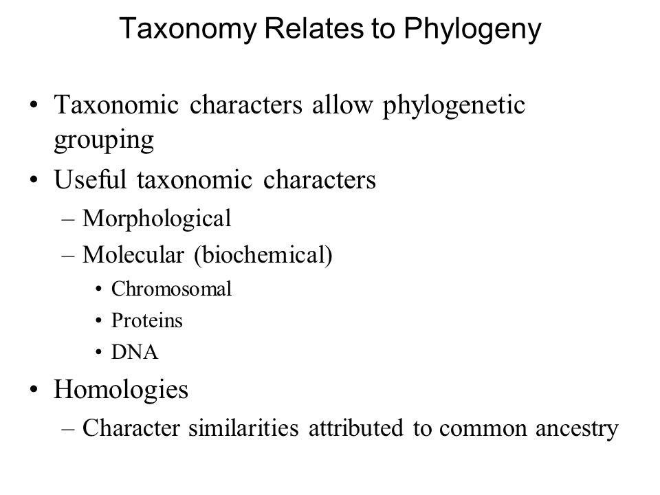 Taxonomy Relates to Phylogeny
